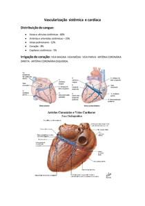 Artéria circunflexa
