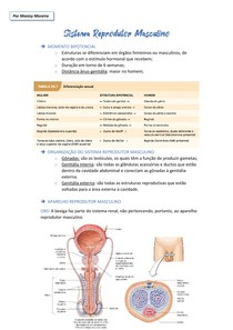 Fisiologia do Sistema Reprodutor Masculino (resumo)