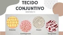 TECIDO CONJUNTIVO - PARTE 1