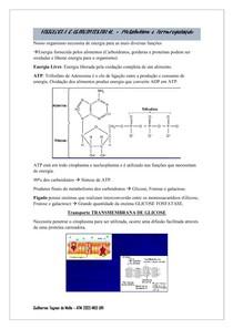 FISIOLOGIA GASTROINTESTINAL - Metabolismo e Termorregulação