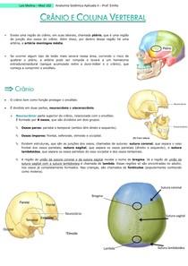 Crânio e Coluna Vertebral