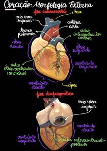 Coração - Atlas