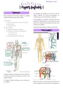 órgãos linfoides