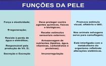 função da Pele