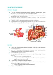 Anatomia do intestino