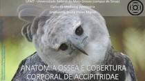 ANATOMIA ÓSSEA E TEGUMENTO DE AVES DE RAPINA