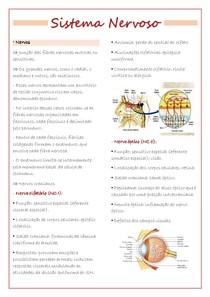 Sistema Nervoso - nervos