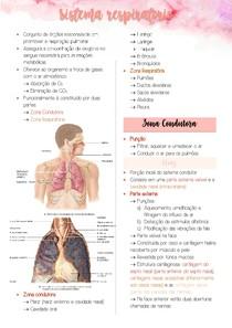 Sistema Respiratório - Anatomia Respiratória