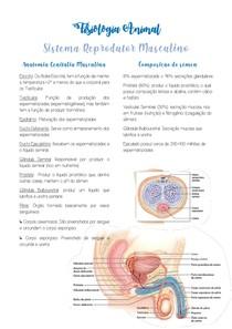 Resumo Sistema Reprodutor Masculino - Fisiologia Animal