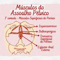 Músculos Superficiais do Períneo - Assoalho Pélvico - @biaresumosdafisio
