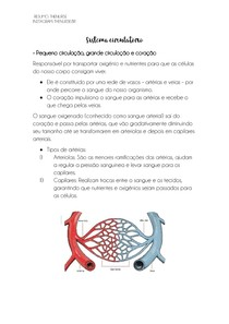 Sistema Imunológico - Células específicas