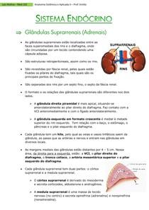 Suprarrenais (adrenais)