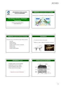 Morfologia interna e fisiologia: Tegumento