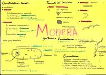 Bactérias e Cianobactérias - Resumo