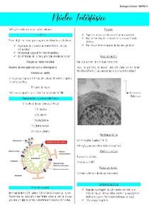 Resumo Núcleo Interfásico
