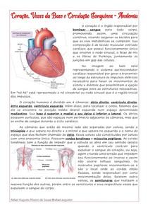 Anatomia Coração, Vasos da Base e Circulação