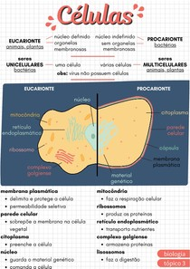 células - citologia
