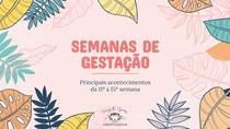 LINHA DO TEMPO - EMBRIOLOGIA - SEMANAS DE GESTAÇÃO (11° À 15°)