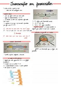 Transcrição em procariotos