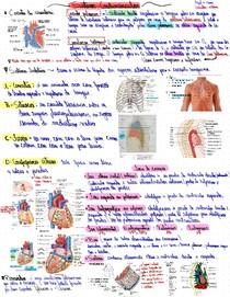 Resumo Teórico Básico (1ª Semestre) - Anatomia do Sistema Cardiovascular