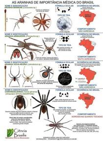 Aranhas de interesse médico