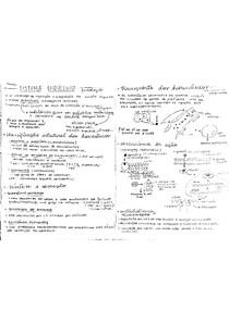 sistema endocrino - fisiologia