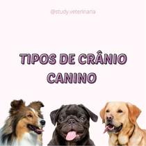 TIPOS DE CRÂNIO - CÃES
