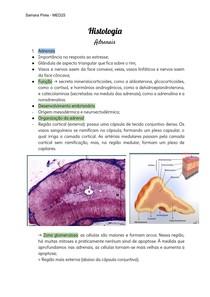 Histologia da glândula suprarrenal