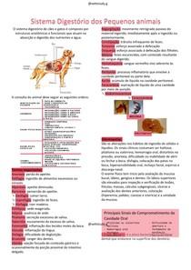 Sistema Digestório dos Pequenos animais