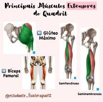 Principais músculos extensores do quadril