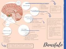 Diencéfalo - mapa mental