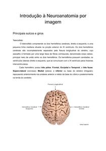 Introdução à Neuroanatomia por imagem