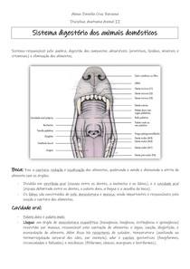 Sistema Digestório dos Animais Domésticos