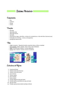 Sistema Urinário - Histologia