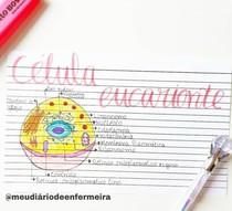 Célula Eucarionte (mapa mental)
