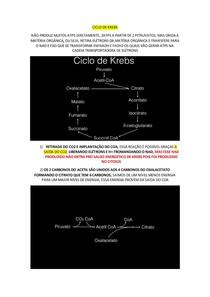 CICLO DE KREBS E CTE