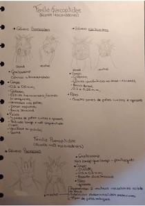 Morfologia do parasita - ácaro