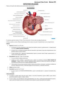 anatomia intestino delgado