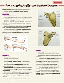 Ossos e Articulações do Membro Superior