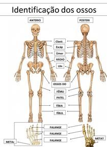 identificação dos osso (EF) ok