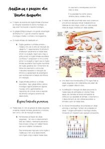 Anatomia e funções dos tecidos linfoide1