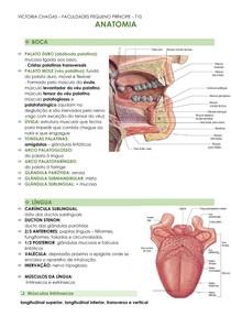 ANATOMIA TGI- boca, língua, músculo deglutição e mastigação, esôfago, estômago, duodeno, jejuno-íleo e intestino grosso