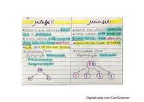 Resumo manual - Divisão Celular