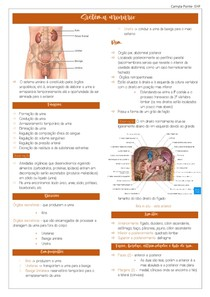Sistema urinário- ANATOMIA