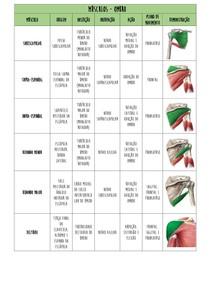 TABELA MÚSCULOS (origem,inserção,ação ) pdf
