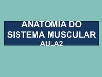 ANATOMIA DO SISTEMA MUSCULAR AULA 2