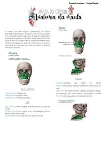Anatomia da maxila