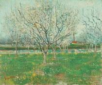 Vincent Willem van Gogh-pomar-em-flor-Ameixa-Trees