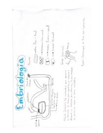Resumo embriologia Veterinária