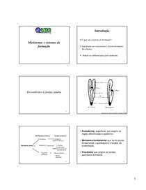 GBI130  aula 3 -MERISTEMAS E SISTEMAS DE FORMAÇÃO